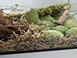 Muschio (tipo lo sfagno) per lettiera, fondo di terrario per rettili (6 palle)
