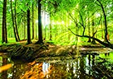 Olimpia Design Fototapete Sonniger Wald, 1 Stück, 10513P8