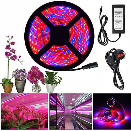 alight-house-plant-grow-strip-light-164feet-smd5050-red-blue-41-led-full-spectrum-rope-light-with-po