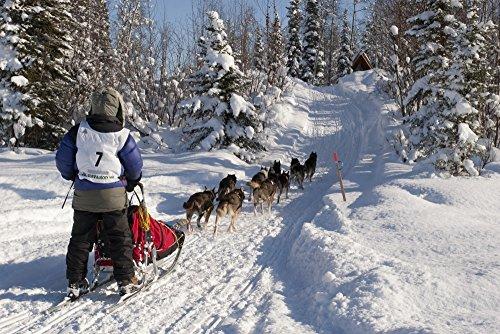 Jeff Schultz/Design Pics - Rebekah Ruzicka On The In-Bound Trail Nearing The Finish Line of The 2009 Junior Iditarod Sled Dog Race Willow Alaska Photo Print (86,36 x 55,88 cm) -