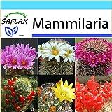 SAFLAX - Geschenk Set - Kakteen - Mammilaria Mischung - 40 Samen - Mammilaria Mix