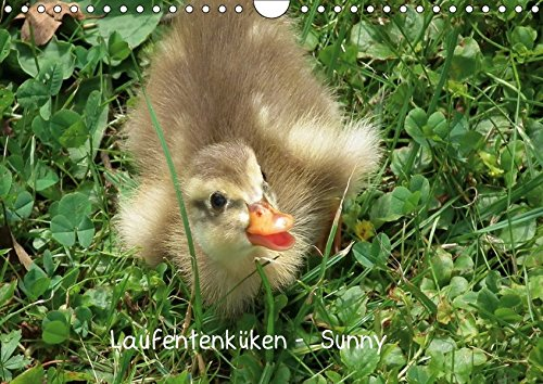 Laufentenküken - Sunny (Wandkalender 2018 DIN A4 quer): LoRo-Artwork (Monatskalender, 14 Seiten ) (CALVENDO Natur) [Kalender] [Apr 01, 2017] LoRo-Artwork, k.A.