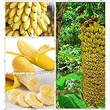 1bag = 100pcs Mini graines de bananes fruits exotiques rares Graines banane en pot Bonsai cadeau plante décoration Maison et jardin