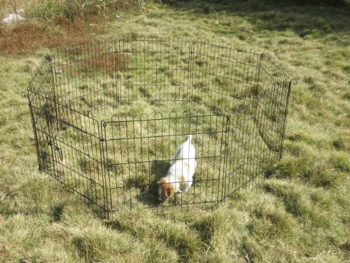Image of VivaPet Outdoor Octagon Rabbit Run Cage Pen with Sun Protection Net Cover, 55-inch, Assorted Color, Black or Silver