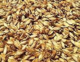 25 KG Bio Dinkelspelz Dinkelspreu Dinkelspelzen aus kbA