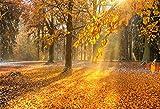 YongFoto 2,2x1,5m Vinyl Foto Hintergrund Goldene Herbstbaum Blätter Sonnenstrahlen Herbst Natur Landschaft Fotografie Hintergrund Partydekoration Hochzeit Fotoshooting Fotostudio Hintergründe