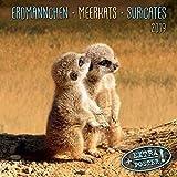 Meerkats/Erdmännchen 2019: Kalender 2019 (Artwork Edition)