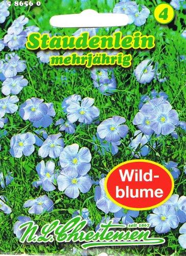 Staudenlein 'Linum perenne ' Lein mehrjährig Staude Wildblumen Schnittblume