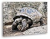 deyoli alte exotische Schildkröte Format: 120x80 Effekt: Zeichnung als Leinwandbild, Motiv fertig gerahmt auf Echtholzrahmen, Hochwertiger Digitaldruck mit Rahmen, Kein Poster oder Plakat