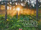 Die Pracht des Waldes - Kalender 2019: Deutschlands schönste Wälder