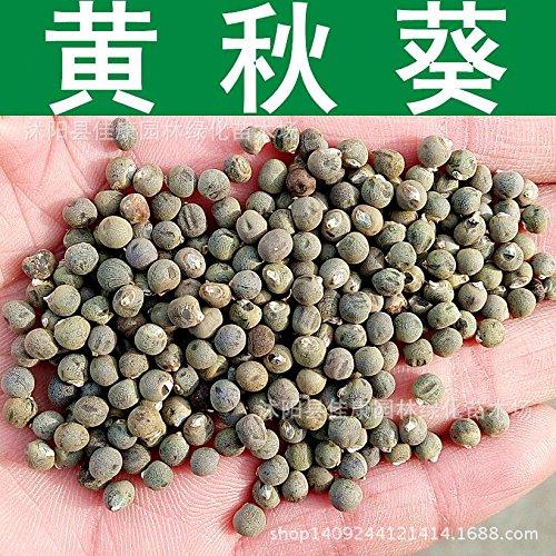 Okra Samen Grüne Okra Gemüsesamen gesunde Gemüsegartenpflanze 50pcs U26