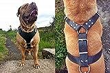 Avon Pet Products Brustplatte Leder Hundegeschirr, XL, schwarz