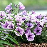 Petunia Hybrida Blumensamen für Topf Balkon Garten Dekoration 100 teile/beutel