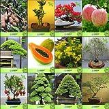 Pinkdose Bonsai Samen: Samen und Pflanzen Combo Tamarind, Bambus, Gulmohar, Applehoop Kiefer, Papaya, Tecoma Stans, Eucalyptu