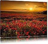 Leinwandbild Panorama Landschaftsbild Mohnblumen beim blühen, Mohnfeld bei Sonnenuntergang in tollen warmen Farben! Wolken am Himmel! Ein Leinwandbild für jede Wand (80 x 60 cm)