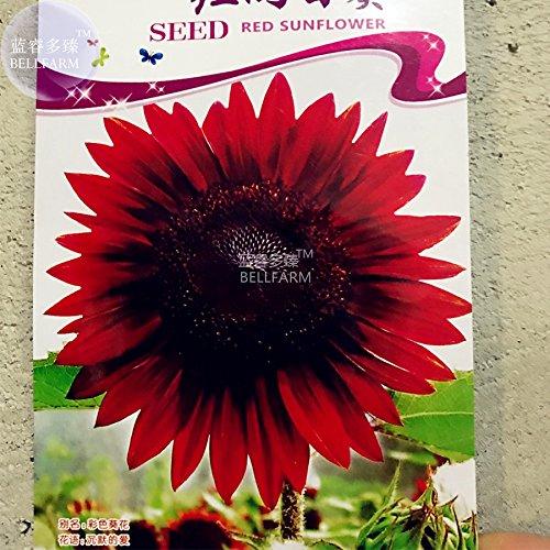 Pinkdose2018 Heißer Verkauf Davitu Sunflower Dark Red & Frische Rote Blumensamen, 6 Samen, Originalverpackung, Sehr SchÃne ornamenat Bonsai Sonnenblumen E4300