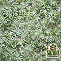 Ausziehbares Rankgitter Blatt de Wilder Wein Verte 1m x 2m von FRANCE GREEN - Du und dein Garten