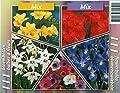 Blumenzwiebel-Sortiment Sommer-Sonne Doppel-Pack, bestehend aus 24x Acidanthera, weiß 6/8 40x Anemone de Caen 4/5 50x Gladiolen rot, 10/12 68x Fresien gelb, 4/5 40x Iris hollandica blau, 7/8 von Amazon.de Pflanzenservice auf Du und dein Garten