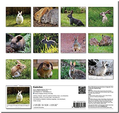 KANINCHEN: Original Stürtz-Kalender 2018 – Mittelformat-Kalender 33 x 31 cm - 2