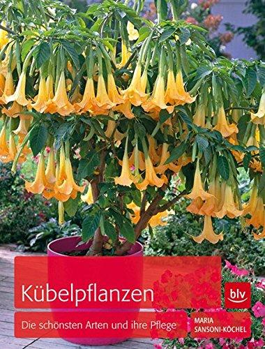 kubelpflanzen-die-schonsten-arten-und-ihre-pflege