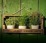 Die Stadtgärtner Rustikales Gartenregal aus Zwiebelsieb ++ Ideal für ✿✿-Töpfe ++ für Drinnen und Draußen (Breite Version)