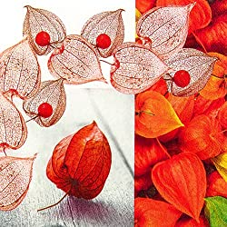 20 Servietten Inca Berry – Physalis überall / Frucht / Herbst / Herbstmotiv 33x33cm