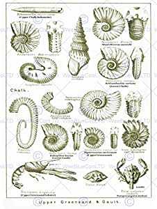 BOOK ILLUSTRATION CRUSTACEAN SHELLFISH FOSSIL CLAY BEACH ART PRINT POSTER CC1052