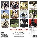 Image de Pug Mugs 2017 Calendar