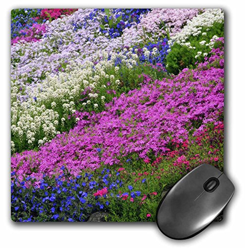Danita Delimont - Flowers - Candytuft, sweet alyssum, Grace Ward, phlox flower - US38 BJA0498 - Jaynes Gallery - MousePad (mp_93600_1) (Sweet Alyssum)