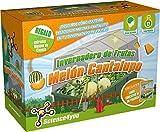 Science4You Serra di frutta: Melone Cantalupo–Giocattolo educativo e scientifico