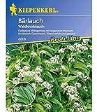 Bärlauch, 1 Tüte Samen