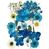 Natuurlijke geperste bloemen voor bloemendecoratie en telefoonhoes, gemengde echte gedroogde bloem voor doe-het-zelf kunst kn