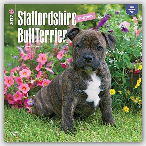 Staffordshire Bull Terrier Puppies - Bull Terrier Welpen 2017 - 18-Monatskalender mit freier DogDays-App: Original BrownTrout-Kalender