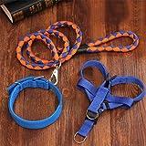 MEILI Hund Kette Hundeleine groß mittlere kleine Hundehalsband Dog Walkers Heimtierbedarf , xxl [70~140 jin] , blue orange