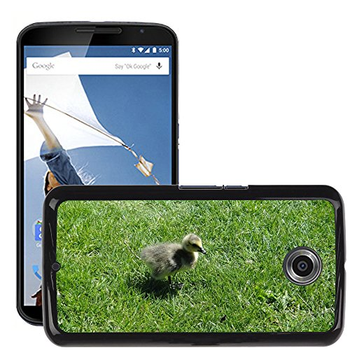 Nur Handy HOT Style Handy PC Hard Case Cover//m00139083Gosling Ente Küken Vogel Baby Young//LG Google Nexus 6