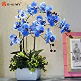 Hot Sale. Sky Blau Phalaenopsis-Orchidee Samen Blumensamen Indoor Bonsai Orchideen 100 Partikel/lot
