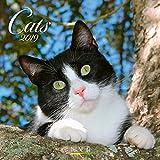Cats 2019. Broschürenkalender - Broschürenkalender mit Ferienterminen