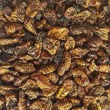 5 kg Seidenraupen getrocknet Koifutter Fischfutter Vögel Zierfische Naturfutter