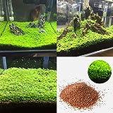 Quanjucheer Aquarium-Pflanze für Aquarien, Wassergras, Unterwasserdekoration, Vordergrundpflanze