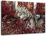 gray wolf Format 80x60 cm Bild auf Leinwand, XXL riesige Bilder fertig gerahmt mit Keilrahmen,...