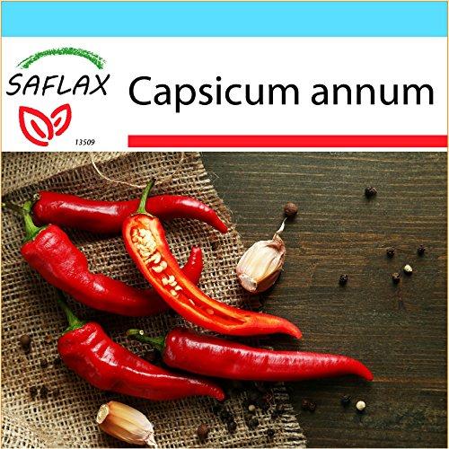 Galleria fotografica SAFLAX - Confezione regalo - Peperoncino di Cayenna - 20 semi - Capsicum annum