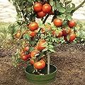 AQUARING 10-er Set, Ø 20 cm grün von DE-PLASTIK GmbH - Du und dein Garten