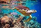 Schildkröte Fische Meer Wasser XXL Wandbild Foto Poster P0141 Größe 90 cm x 60 cm, Größe 90 cm x 60 cm