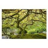 Vliestapete - Grüner Japanischer Garten - Fototapete Breit Vlies Tapete Wandtapete Wandbild Foto 3D Fototapete, Größe HxB: 225cm x 336cm