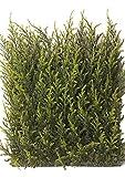 artplants Set 2 x Künstliches Zypressen Heckenelement AGIUS, grün, uv-sicher, 25 x 25 cm - Unechter Sichtschutz/Kunstpflanzen Zaun