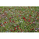 Instant Sunshine 100% seed mix, Over 45 Wildflower Species, 30 grams covers up to 10 sq metres, Wild Flower Seeds