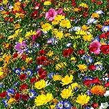 Qulista Samenhaus - Blumenmischung 'Nützlings-Bienen-Mix' für ca. 0,5 qm Saatgut winterhart mehrjährig bienenfreundlich