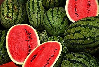 Wassermelone Crimson Sweet - 10 Samen -Zucker- Süss- von Samenchilishop auf Du und dein Garten