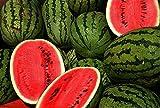 Wassermelone Crimson Sweet - 10 Samen -Zucker- Süss-