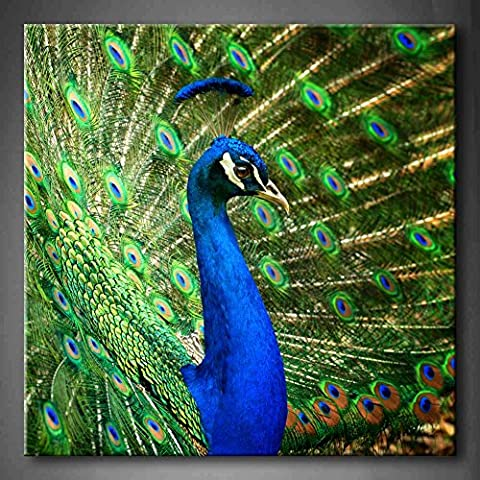Blue Proud Male Asian Peacock Shows Off His Fascinating Plumage Wall Art Painting Pictures Print On Canvas Animal The Picture For Home Modern Decoration Stretched By Wooden Frame Ready To